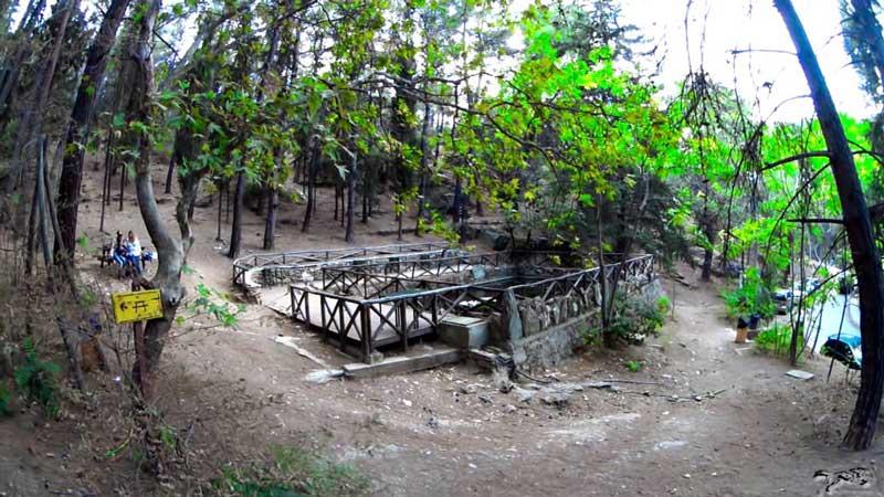 λιμνούλα-δάσος